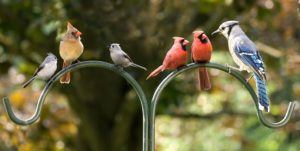 Spotting Scope vs Binoculars - Birding